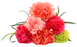 Beautiful Bouquet Of Colorful Carnation Flowers Sticker