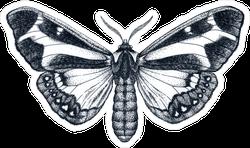 Beautiful Butterfly Ink Sketch Tattoo Sticker