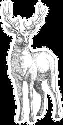 Beautiful Deer Illustration Sticker