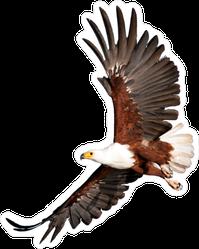 Beautiful Eagle Flying Sticker
