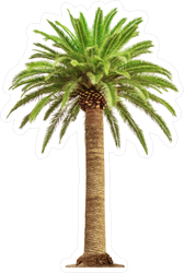 Beautiful Full Palm Tree Sticker