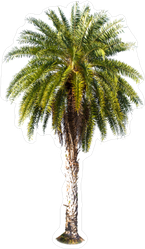 Beautiful Green Palm Sticker