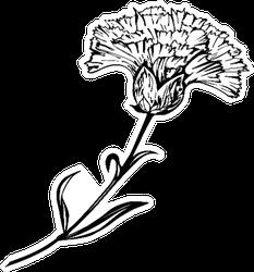 Beautiful Hand-drawn Carnation Ink Illustration Sticker