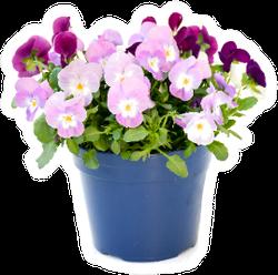 Beautiful Pansy Viola Flowers Bouquet Pot Sticker