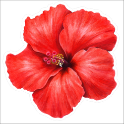 914af07276d4 Beautiful Red Hibiscus Sticker
