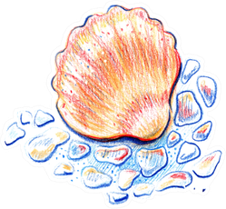Beautiful Seashell Painted With Watercolor Pencils Sticker