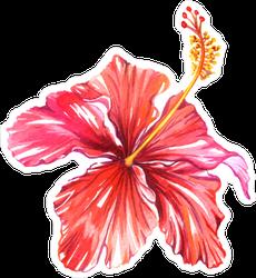 Beautiful Single Hibiscus Flower Sticker