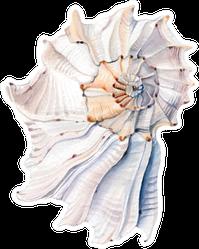 Beautiful Watercolor Sea Shell Sticker
