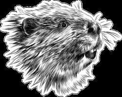 Beaver Head Sketch Sticker