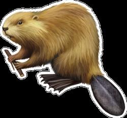 Beaver Holding Tree Branch Illustration Sticker