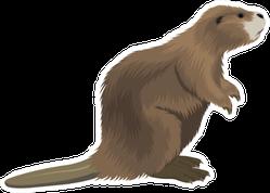 Beaver Illustration Sticker