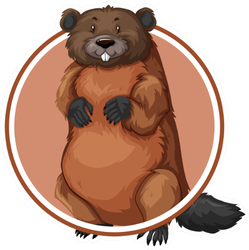 Beaver In Circle Banner Illustration Sticker