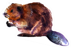 Beaver On A White Background Watercolor Illustration Sticker