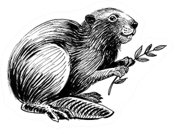 Beaver With A Tree Branch Ink Drawing Sticker