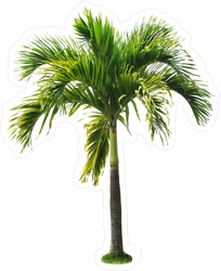 Betel Palm Tree Sticker