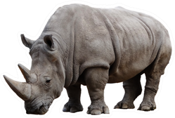 Big African Rhino Isolated On A White Sticker