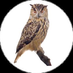 Big Brown Owl On Branch Sticker