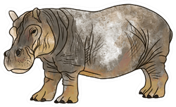 Big Hippopotamus Hand Drawn Illustration Sticker