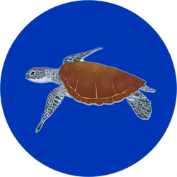 Big Ocean Turtle Sticker