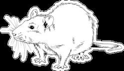 Big Rat Hand-drawn Sketch Sticker