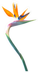 Bird Of Paradise Flower With A Long Curved Stem Sticker
