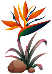 Bird Of Paradise Flower With Leaves And Rock Sticker