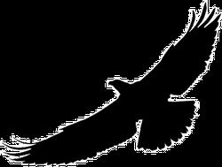 Bird of Prey Silhouette Sticker