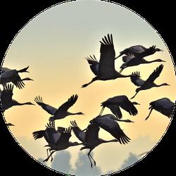 Birds In Flight Flock Of Cranes Flies At Sunrise Sticker