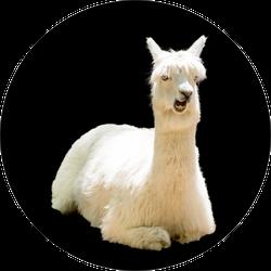 Bizarre Funny Llama On Black Sticker