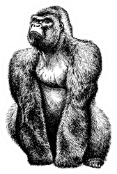Black And White Engrave Isolated Gorilla Illustration Sticker