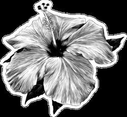 Black and White Hibiscus Sticker