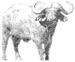 Black And White Sketch Buffalo Sticker
