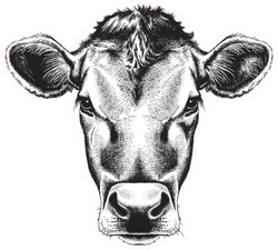 Black And White Sketch Of A Cow's Face Sticker