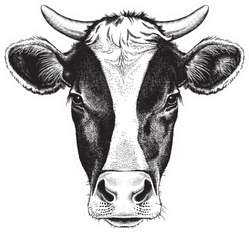 Black And White Sketch Of A Friesian Cow's Face Sticker