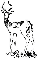 Black And White Sketch Of Antelope Sticker