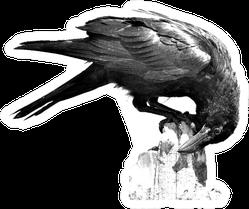 Black Crow Portrait With White Background Big Crow Sticker