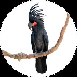 Black Palm Cockatoo Perching On A Branch Sticker