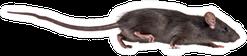 Black Small Rat Sticker