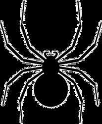 Black Spider Silhouette Sticker