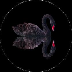 Black Swan Isolated On Black Background Sticker