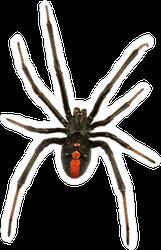 Black Widow Spider Top View Sticker