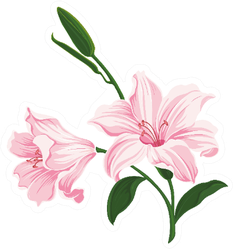 Blooming Pink Lily Flowers Sticker