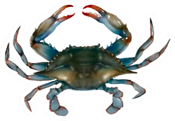 Blue Crab On White Background Sticker