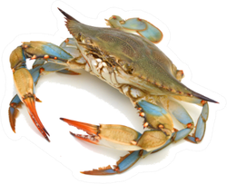 Blue Crab On White Sticker