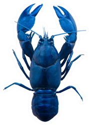 Blue Lobster Isolated On White Sticker