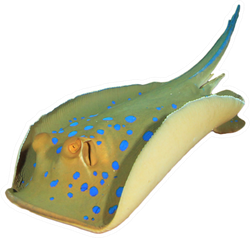 Blue Spotted Stingray Isolated On White Sticker