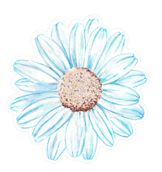 Blue Watercolor Daisy Flower Sticker