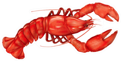 Boiled Lobster On A White Sticker