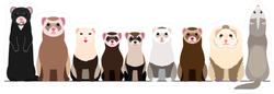 Border Of Various Ferrets Sticker