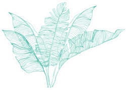 Botanical Design Set Of Banana Leaves Illustration Sticker